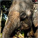 Ads_Elephant